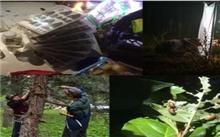 西藏林业部门加强外来有害生物防控