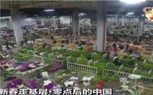 11月6日昆明花卉拍卖市场拍品价格