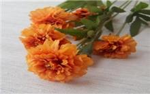 黄色康乃馨的花语――抛弃