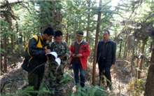 财政部和国家林业局将开展森林抚育补贴试点