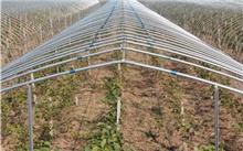 日光温室池藕栽培技术