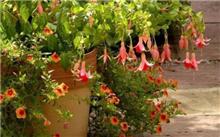 室内植物养护摆放的误区