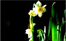 水仙花的传说
