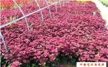 花木种子贮藏法