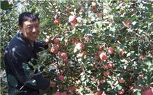 果树垂柳式整枝技术简介