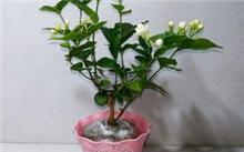 盆花的越冬管理