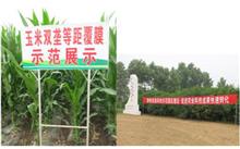 内蒙古自治区地膜小麦栽培技术规范