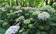 花卉植物种类纷繁