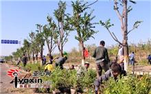 反季节移植树木的技术