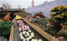 河南大型菊艺盆景《清明上河图》广受好评