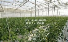 无土栽培香椿芽栽种技术