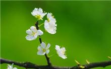 花卉病虫害防治5