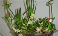 漳州水仙花三种大型栽培方法