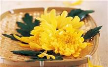食菊花祛病