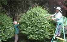 苗木养护技术管理措施