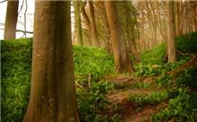 绿色是生命的底色,森林哺育着人类