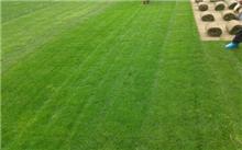 冷季型草坪的种植与管理