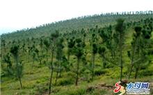 楠木造林技术