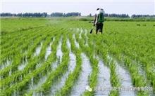 如何提高农药防治效果