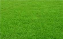 草坪种子的贮藏