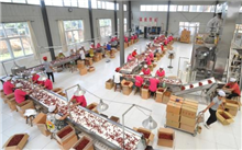 金丝小枣标准化生产技术