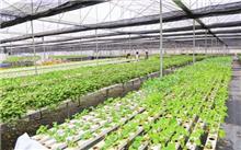 无公害蔬菜生产应掌握的几个环节