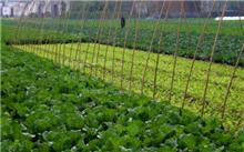 蔬菜无公害种植的关键措施