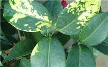 花卉病虫害防治2