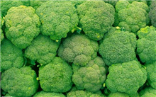 新绿雪西兰花高效种植技术
