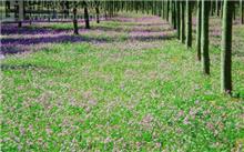 地被植物的特点和种类