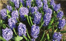 花卉育种中的几个关键环节