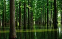水杉的栽培技术