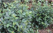 农业野生植物保护办法