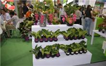 """中国国际花卉园艺展览会""""Hortiflorexpo IPM Shanghai""""备受瞩目"""