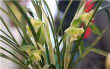 中国(昆明)兰花博览会将办