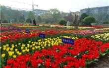 西安植物园举办迎双节花卉新品种展示会