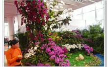 首届中国泰山国际兰花节泰山苗木花卉交易会开幕