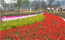 2006奥运花卉新优品种应用展示会 将在北京海淀公园举办