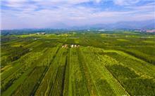 北京:安排部署秋季平原造林工作