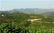 广西西林发展生态林业 森林覆盖率77.52%