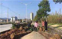 宣称城区道路绿化提升工程全线施工