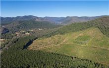 山东枣庄今年完成造林面积20.6万亩