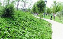 昆明:多种乡土树种 打造滇派园林