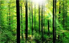 """江门市""""森林围城 树林进城""""绿色行动成效显著"""