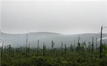 黑龙江:大兴安岭森林资源实现快速持续恢复性增长