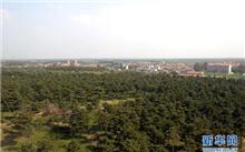 """辽宁彰武县""""四个强化""""开展造林整地"""