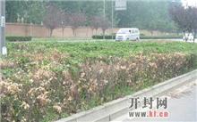 30000苗木绿化带补疤痕