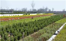 全省建立了3000亩的林业苗木交易市场