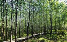 安徽合肥生态包河绿化造林再升级