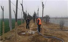 """安徽省濉溪县南头镇积极促进森林增长工程"""""""